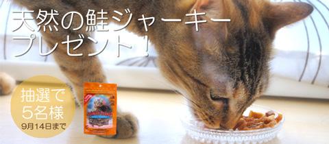 猫のおやつプレゼント