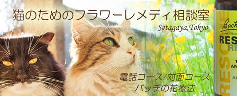 猫のフラワーレメディ相談室