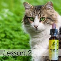 猫のフラワーレメディ、レッスン2