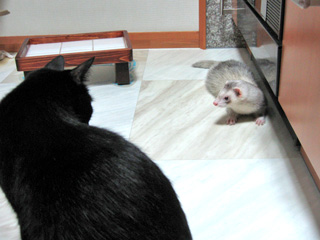 ビリーと猫ノア