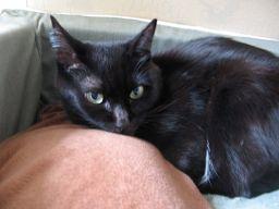 黒猫と湯たんぽ
