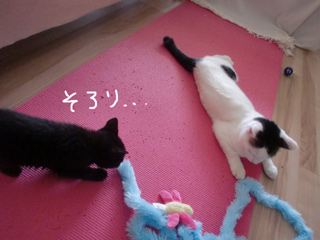 アン&ニュイちゃん