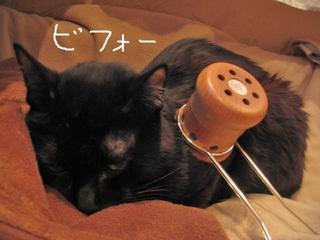 猫ノアと温灸