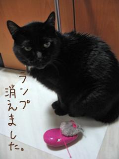 リモコンおもちゃと猫ノア部長