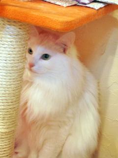 フィルウの看板猫さん