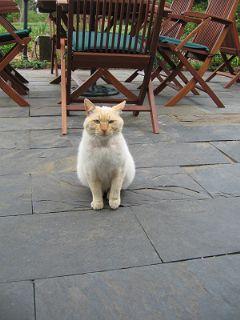猫のお出迎え