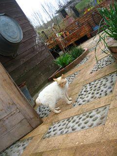 猫パトロール中