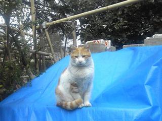 公園猫さん