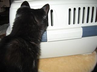 黒猫のアタマ