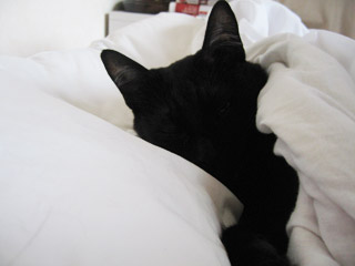 ベッドの中の黒猫