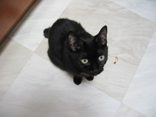 おねだり黒猫