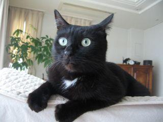 ショックを受ける猫ノア