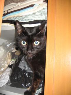 黒猫ノアとクローゼット
