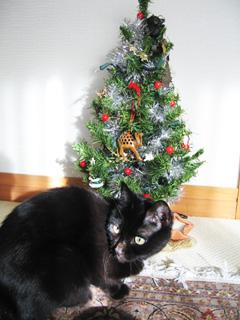 猫ノアとクリスマスツリー