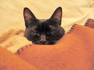 黒猫、睡眠中