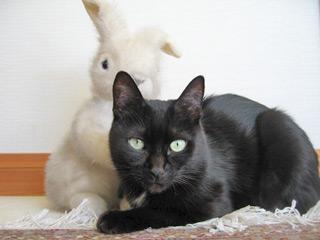 お正月の猫ノア