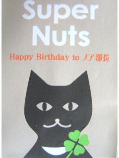猫ノア10歳