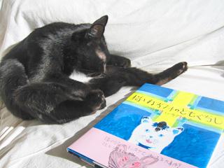 非協力猫ノア