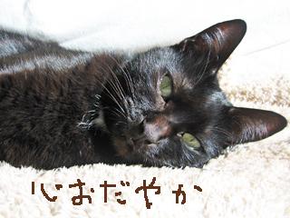 猫ノアのストレス