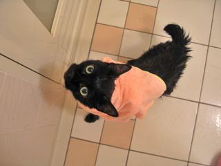 猫ノア、モンシュシュで入浴