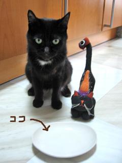 猫ノアのハッピーハロウィン