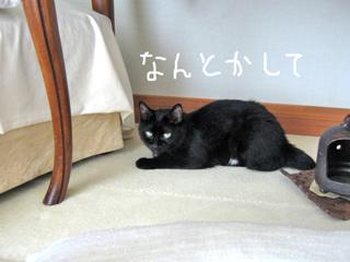 猫ノアの夏