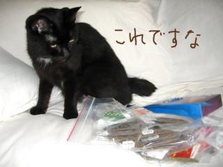 猫ノアとインターペット