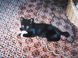 猫ノア2001年