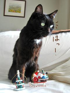 猫ノアのクリスマス