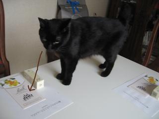 猫ノア、レメディ教室準備