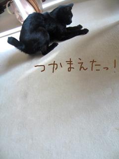 猫ノア、アシスタント中