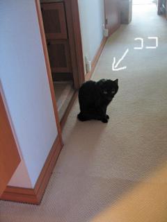 猫ノア、留守番