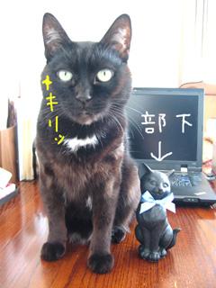 猫ノア部長と部下猫