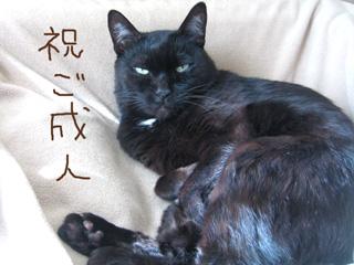 猫ノア、お祝い申す