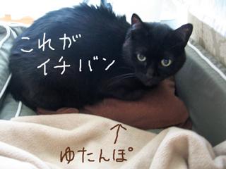 猫ノアとゆたんぽ