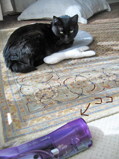 猫ノアと掃除機