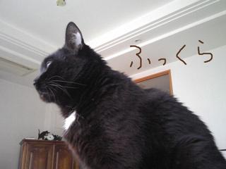猫ノア、成長疑惑