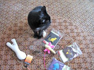 猫ノアと出店準備