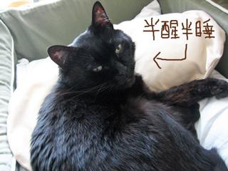 猫ノア、寝ぼけ眼