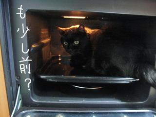 猫ノアとオーブン