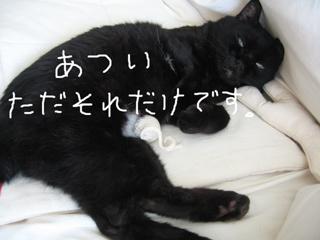夏の猫ノア