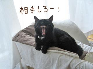 猫ノア3バージョン
