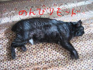 猫ノア、2016年元旦