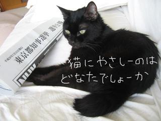 猫ノアと選挙公報