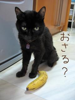 猫ノア、便秘解消