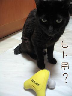 猫ノアとマッサージグッズ