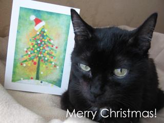 猫ノア、メリークリスマス