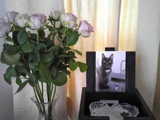 猫ノアとピンクのバラ