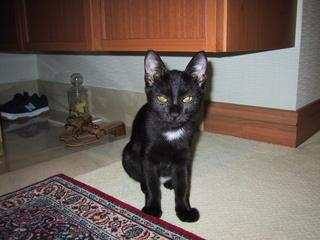 2001年猫ノア