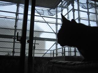 猫ノアと台風